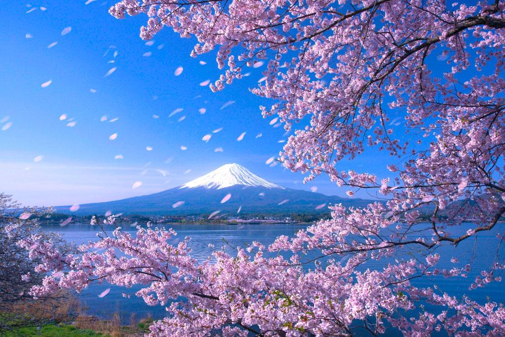 Озеро Кавагути с видом на гору Фудзи. Япония