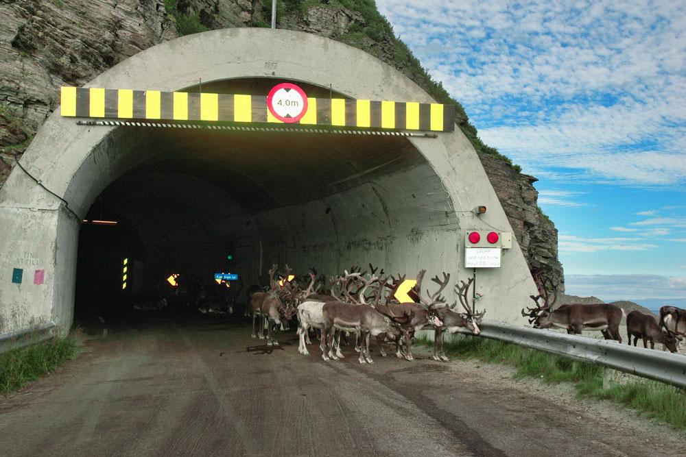 Дорога на самый север Норвегии