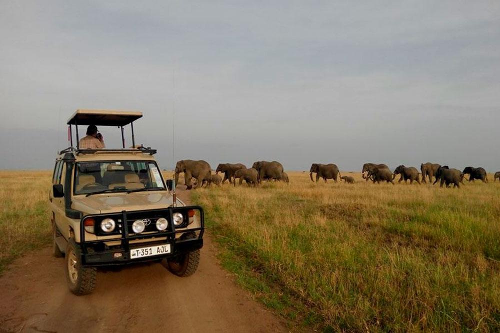 Сафари в национальном парке Тарангире