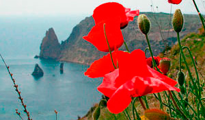 Photo tour in Crimea «Flowering poppies»