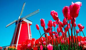Фото-экскурсионный тур по Голландии