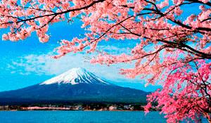 Япония на фоне цветения сакуры