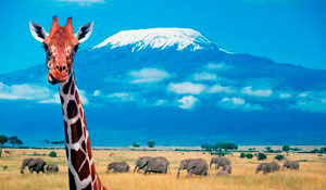 Climbing Kilimanjaro and Safari