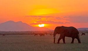 Дикая природа Танзании и отдых на Занзибаре